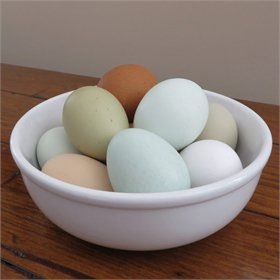 Beautiful chicken eggs of different colors