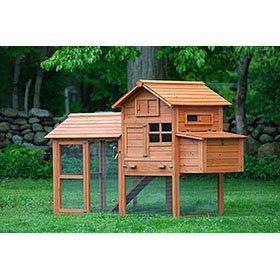 The Clubhouse Coop w/Run (up to 4 chickens)