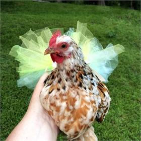 Chicken Tutu (see color & size options)