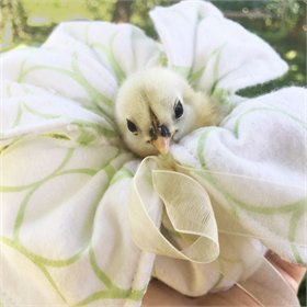 Peep Pouch - Cuddle Chicks Safely!