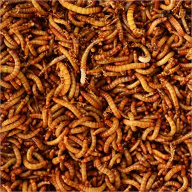 Dried Mealworms, 2 sizes