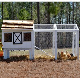 Dominique Chicken Coop (10 chickens)