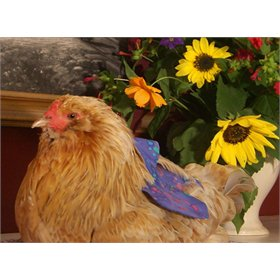 Pampered Poultry Feather Guard