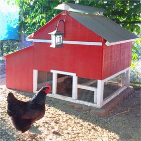 Easy Clean Chicken Coop (up to 6 chickens)