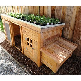 Herb Garden Coop Plans (up to 4 chickens)